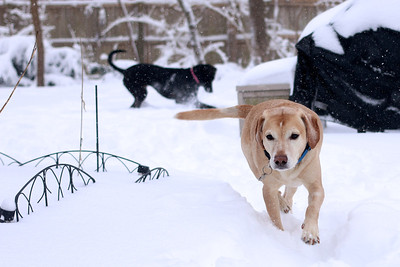 Winter sports: Lucy and Boone in the blizzard of 2014.
