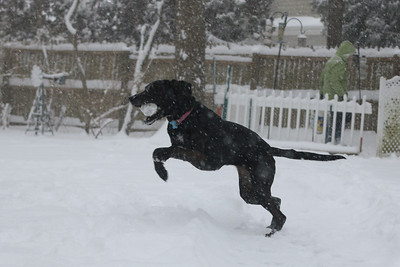Winter sports: Lucy in yet another snowstorm, 2014.