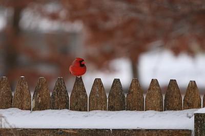 A little backyard birding on a cold, sunny day.