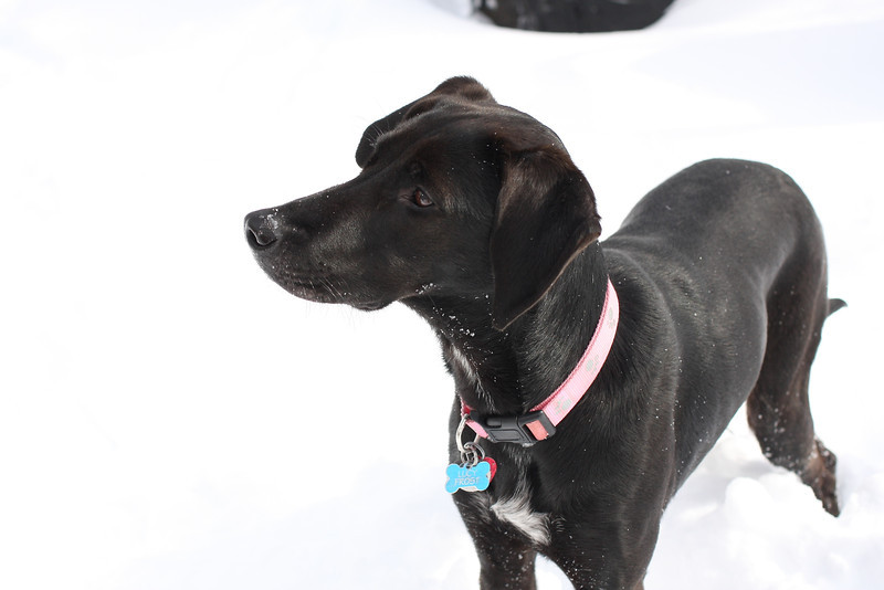 Lucy plays in the snow. Snow!