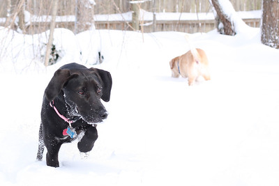 Lucy and Boone play in the snow. Snow!
