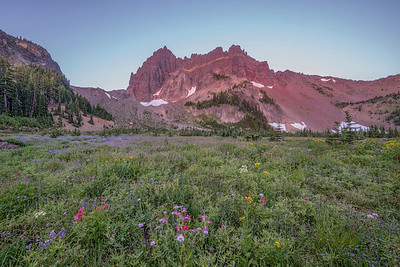 Three Fingered Jack  1