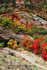 Fall colours of zion