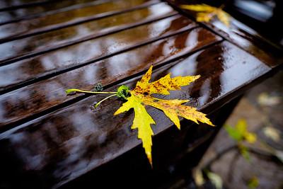 Wet Fall