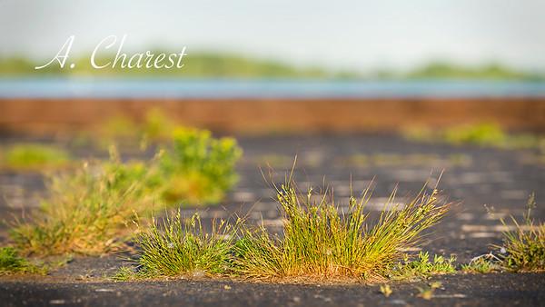 L'herbe du quai