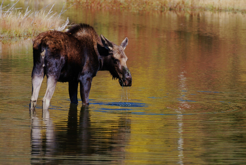 Moose Pond by Shalayne Smith-Needham