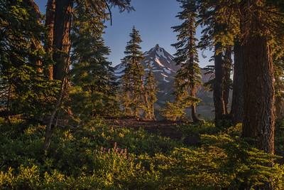 Mt. Jefferson from PCT