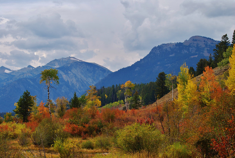 Autumn in the Tetons by Shalayne Smith-Needham