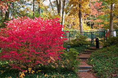 Red Bush Oct 2008