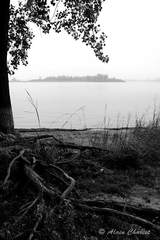 Brumes sur le fleuve