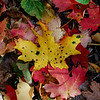 Colors of Autumn by Shalayne Smith-Needham