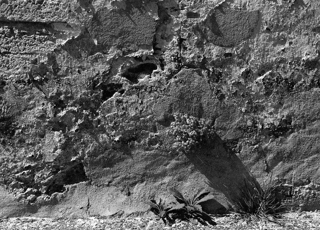 Texture en noir et blanc d'un mur et ses premiers végétaux / Texture in black&white of an old wall with its first nature structures