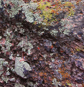 Crayola Lichen II- Pinnacles Nat'l Monument