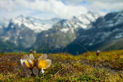 100610 Swiss Alps_MG_4403