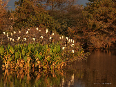 The birds are huddling together on a chilly morning at Wakodahatchee Wetlands.