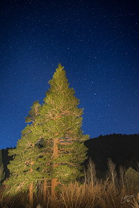 Ursa Major Over Jeffrey Pine