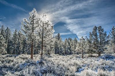 Poconip Pines