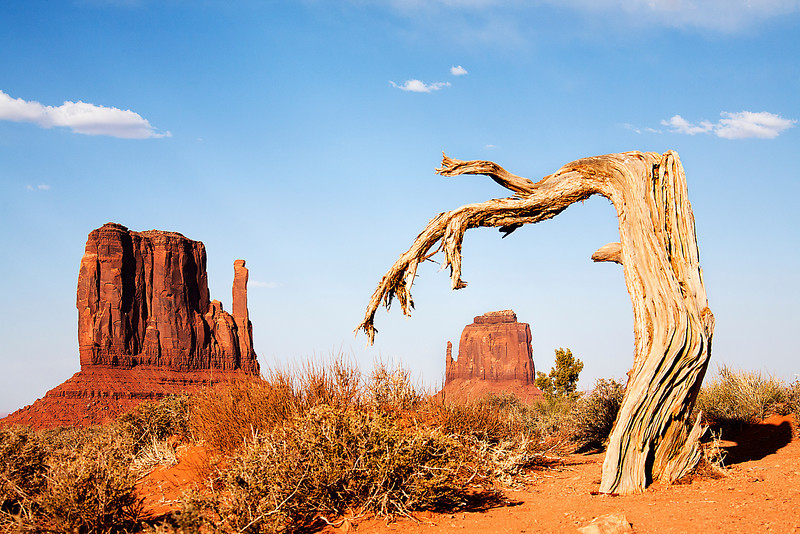 Gnarled Tree And Mittens - Monument Valley, UT