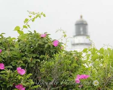 Near Two Lights, Cape Elizabeth
