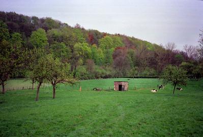 Limburgse hellingbossen