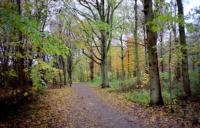 """NS wandeling """"De Horsten"""""""