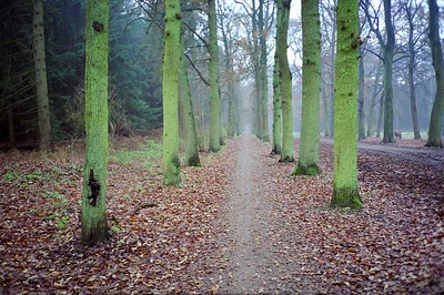 Nederland 2004