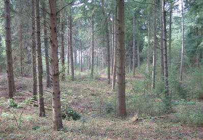 Oranjewoud Heerenveen