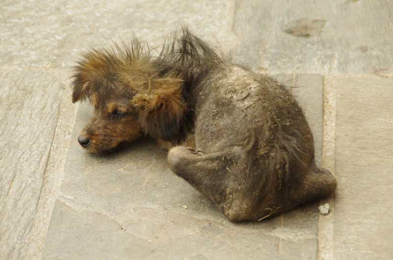 Weird creature in Pashupatinath/Kathmandu