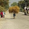 Farm Work in Lumbini, The Terrai