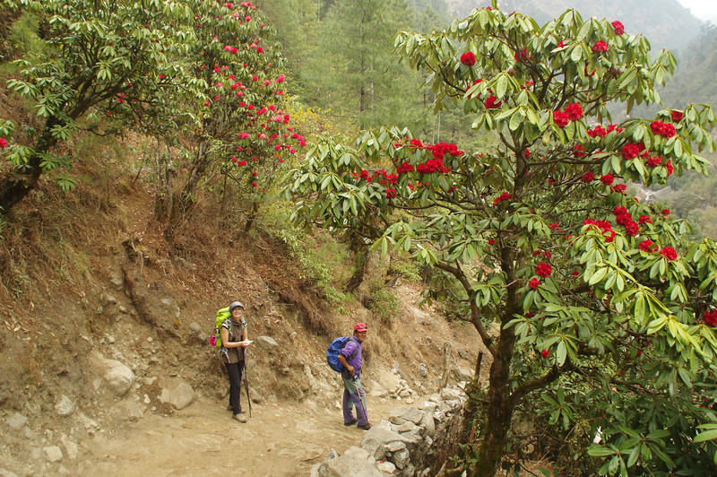Spring in the Himalayas with great colours near Lukla