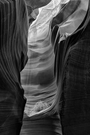 Tumbleweed in Secret Canyon