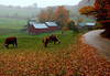 "The famous Jenne Farm, Vermont, taken about 5PM. I stood here for about 45 minutes as the cattle slowly moved closer, my car totally blocking the narrow road, and never saw a soul. A cold, steady rain that had fallen since 8AM had me and my ""water resistant"" coat totally soaked. I was chilled and shivering by this point, but savoring the photo op to the max. The soft patter of rain was the only sound. Normally in October photographers will have to take turns here for this prime viewing spot, but it was all mine for those peaceful moments. A thin but distracting electric fence magically vaporized in editing."