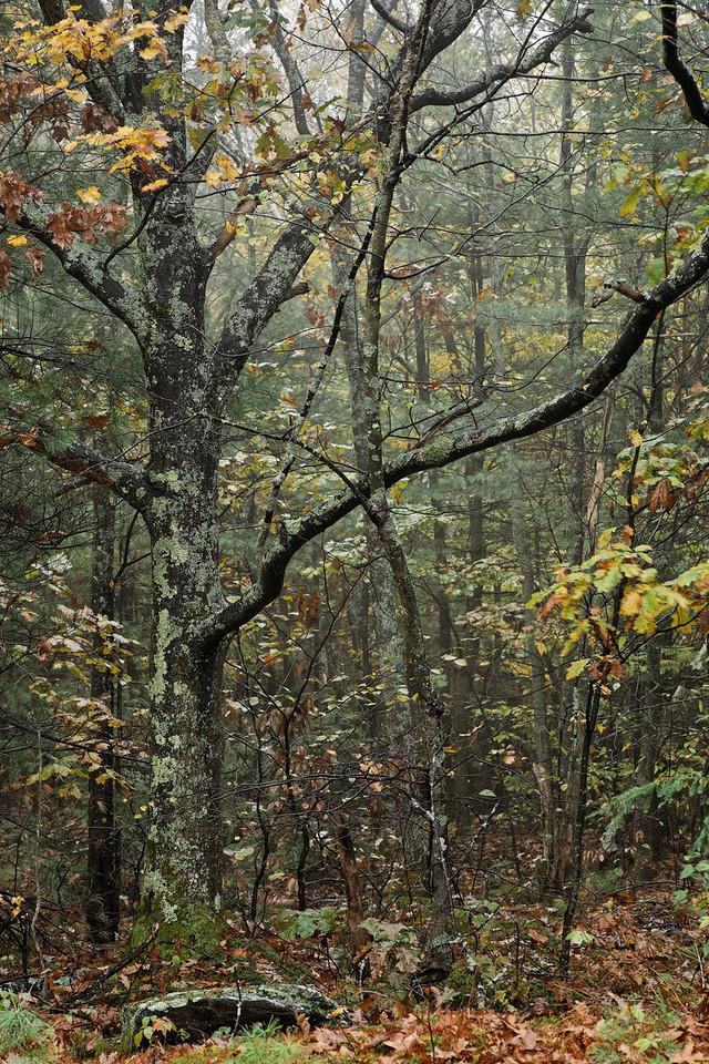 NE Fall 2007 (47 of 65)