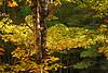 NE Fall 2007 (2 of 65)