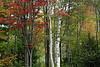 NE Fall 2007 (1 of 65)