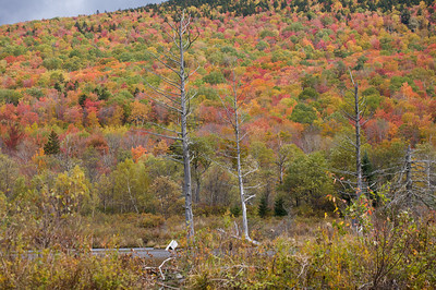 Fall Foliage, NH
