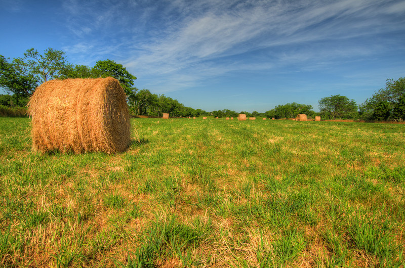 Hay Field: Order a limited addition print of 100.