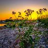 Golden Sunset - Barrington, RI