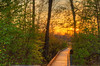 Boardwalk in the woods, order limited addition print of 100
