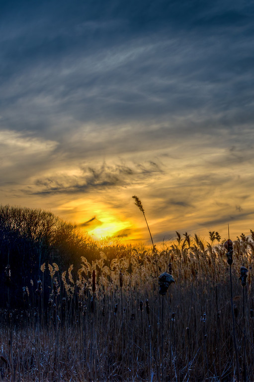 Sunset over Cattails