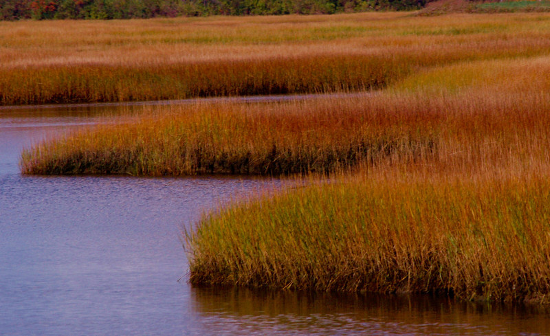 Rustic Marsh. Plum Island, Newburyport, MA<br /> Angela Litterio
