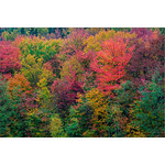 Eye Candy<br /> <br /> Vibrant colors from fall foilage in Vermont. This is good example where crappy weather( rain and clouds) results in saturated photos. I'm very sure people who have not been to states in New England would guess colors are altered in photoshop but in reality i have to reduce the vibrance here a bit ...