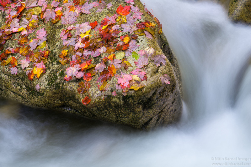 Fall Foilage Rock And Water