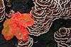 Leaf against Lichen