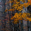 Yellow Golden Leaves And Trees