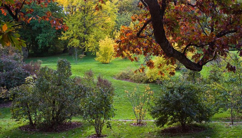 Arnold Arboretum in Autumn