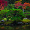 Fall Colors In The Washington Arboretum, Seattle, WA An Island Of Color - Washington Arboretum, Seattle, Washington St