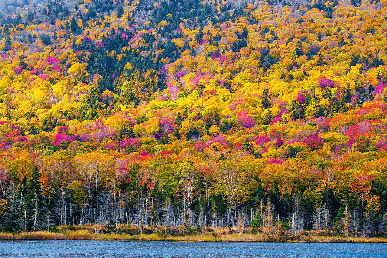Beaver Pond, Fall Colors, Lincoln, New Hampshire, 新罕布什尔州, 秋色