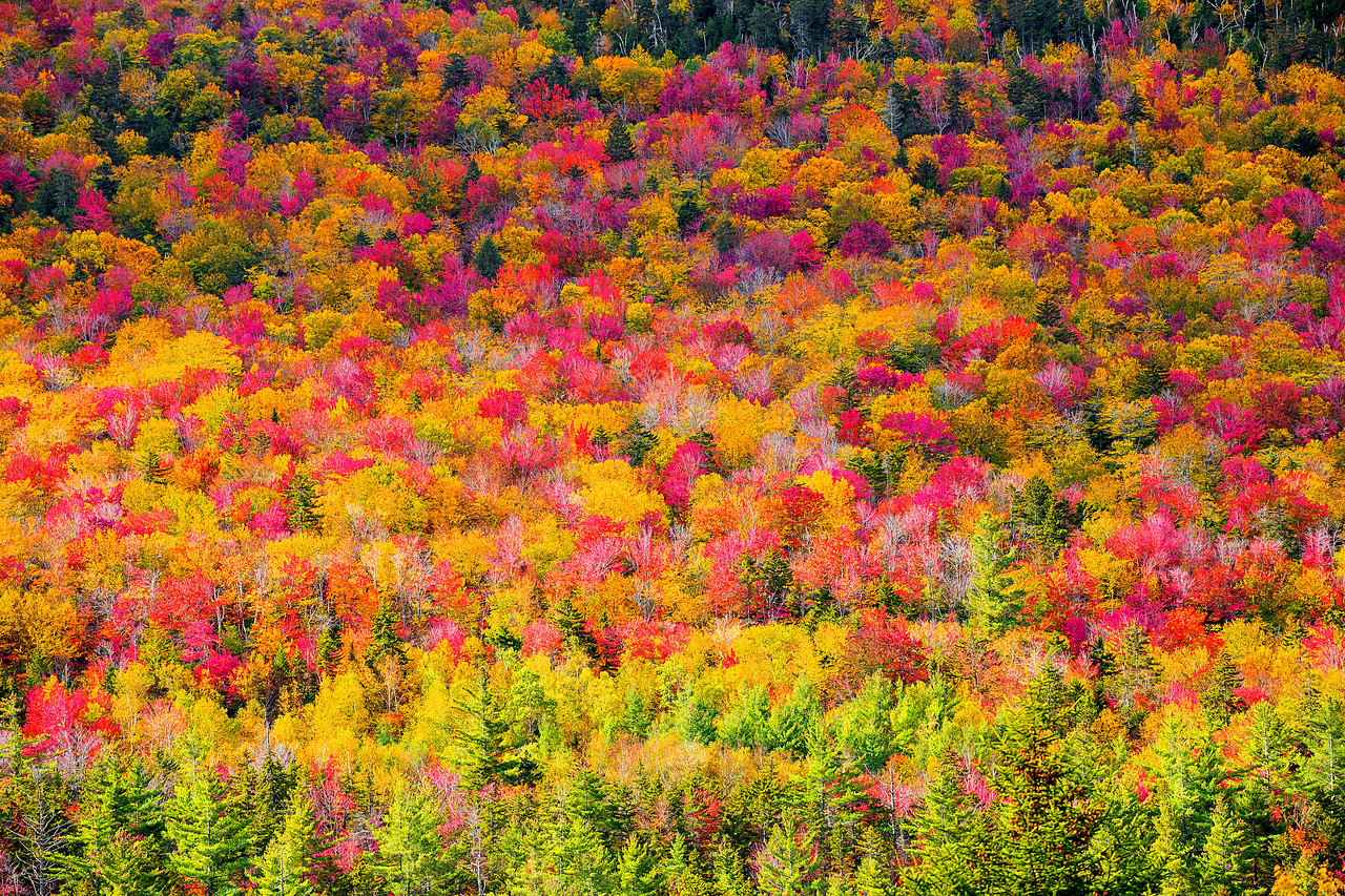 Fall Colors, Kancamagus Highway, New Hampshire, 新罕布什尔州, 秋色