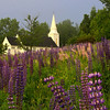 Lupines  at St. Matthew's Church in Sugar Hill, NH.